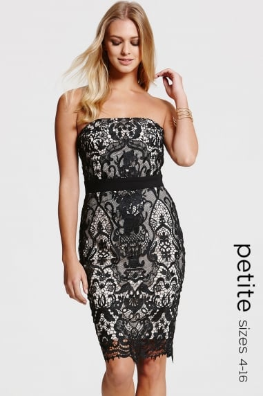 Paper Dolls Petite Black and Beige Lace Dress